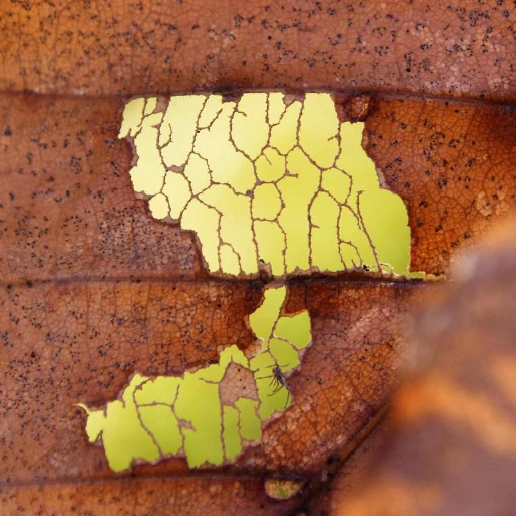 macro photo of decayed leaf
