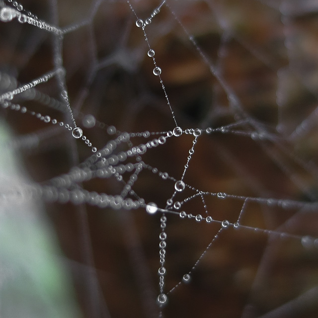 dew drops on a spider web. neat geometric pattern