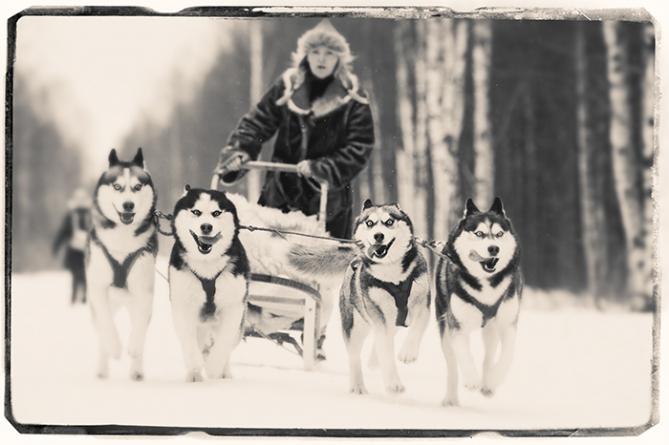 Huskies drawing sledge, Tallinn, Estonia