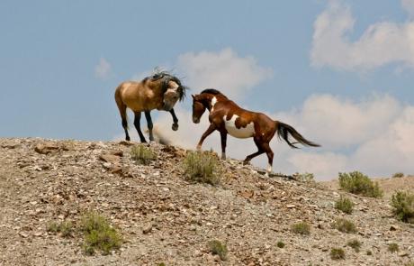 Patrick Brennan's Equine Photography