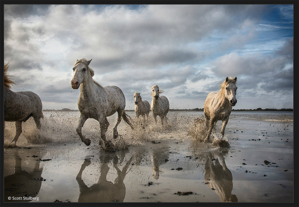 Exposure X Bundle-Scott Stulberg Horses