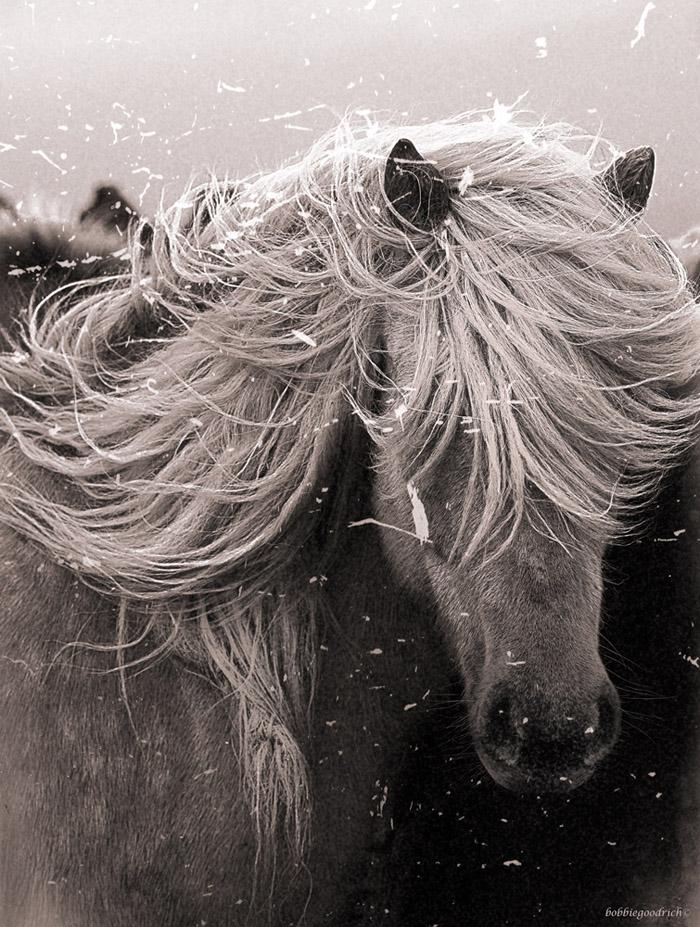 Bobbie Goodrich - Horse Exposure