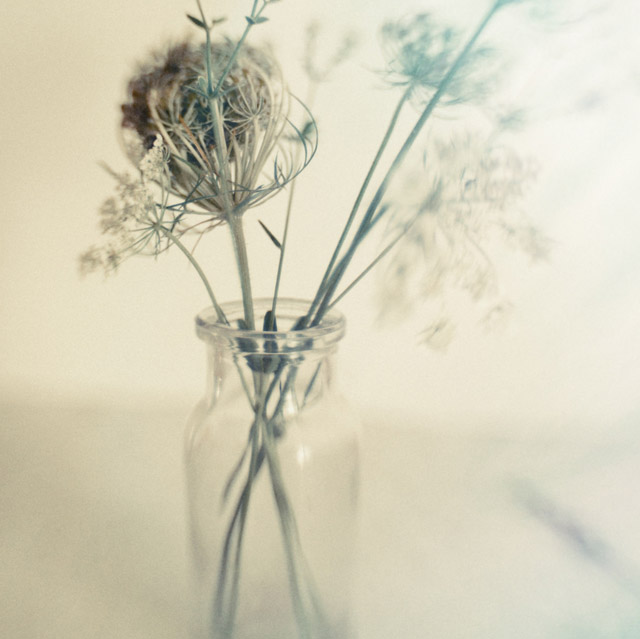Image © Trina Baker