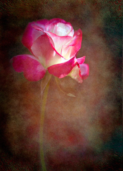 oil paint effect Denise Ippolito -- Flower with Texture