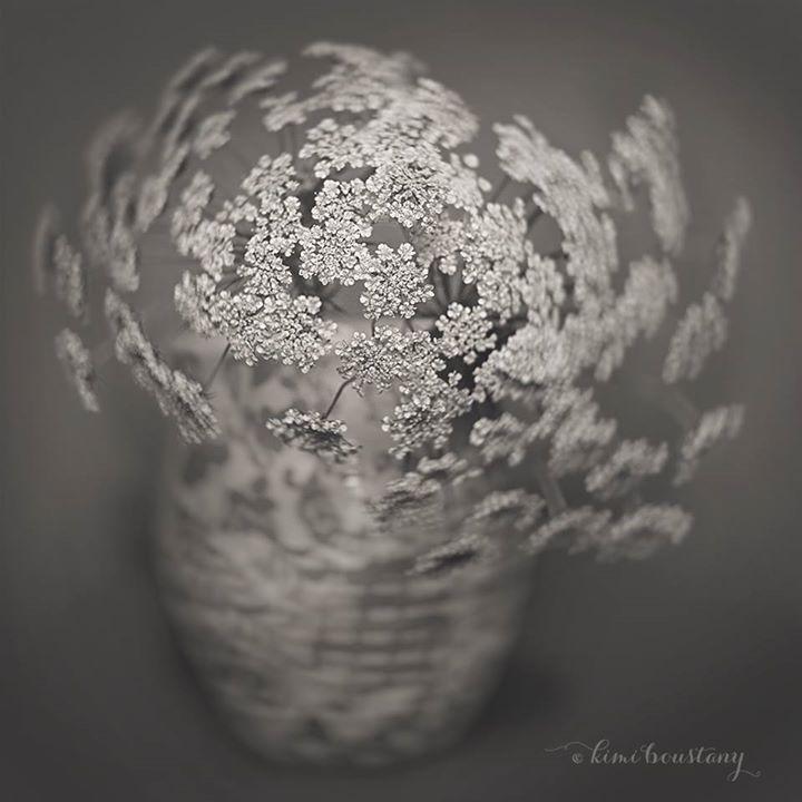 24 Kim Boustany -- POTM July Alien Skin